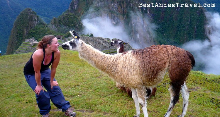 Hypnotism of the Llama in Machu Picchu