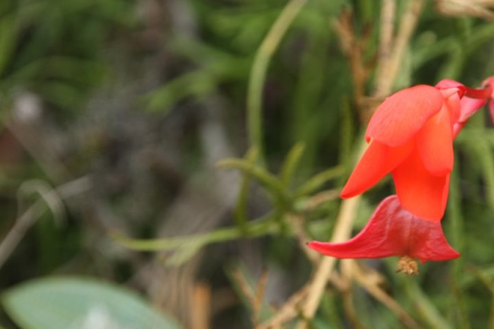 orchid-at-machu-picchu