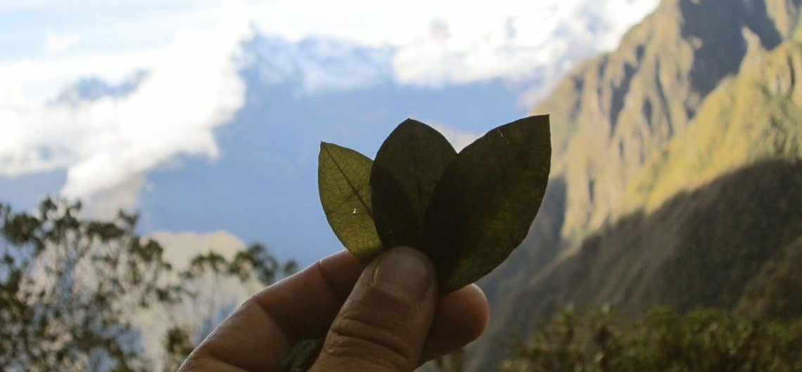 Coca Leaf Altitude Sickness In Cusco